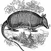 Vintage Armadillos Illustration - 1800s Armadillo Images