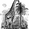 Vintage Giraffes Illustration - 1800s Giraffe Images