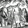 Vintage Owl Elephant Horse Illustration - 1800s Animals Images