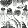 Vintage Jellyfish Illustration - Jelly Fish Images.
