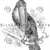 Vintage Toucan Bird Illustration - 1800s Birds Images.