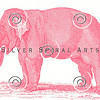 Vintage Pink Elephant Illustration - 1800s Elephants Images.