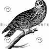 Vintage Owl Illustration - 1800s Owls Images.