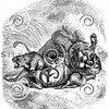 Vintage Lion Tiger Leopard Illustration - 1800s Cats Images