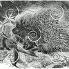 Vintage Porcupine Illustration - 1855 Porcupines Images.
