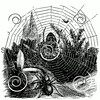 Vintage Spider Web Illustration - 1800s Spiders Images