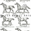 Vintage Horse Gaits Illustration - 1800s Horses Images.