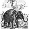 Vintage Elephants Illustration - 1800s Elephant Images