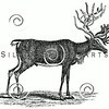 Vintage Reindeer Illustration - 1800s Deer Stag Images.