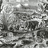 Vintage African Animals Illustration - 1800s Elephant Lion Images