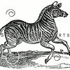 Vintage Zebra Illustration - 1800s Zebras Images.
