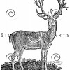 Vintage Deer Illustration - 1800s Stag Images.