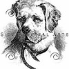 Vintage St. Bernard Dog Illustration - 1800s Dogs Images.