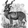 Vintage Antelope Illustration - 1800s Spiral Horn Images
