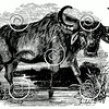 Vintage Water Buffalo Illustration - 1800s Bison Images