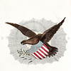 Vintage 1800s Color Illustration of American Eagle - CHRISTIAN FAMILY.