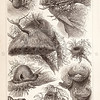 Vintage sepia illustration of nests from Meyers Konversations Lexikon 1913 Encyclopedia.  Antique digital download of old print - nests, bird, nature, animals, nest, eggs.  The natural age-toning, paper stains, and antique printing imperfections are preserved in this 1900s stock image.