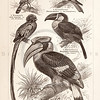 Vintage sepia illustration of birds and parrots from Meyers Konversations Lexikon 1913 Encyclopedia.  Antique digital download of old print - parrot; tropical; bird; wing; feather; beak.  The natural age-toning, paper stains, and antique printing imperfections are preserved in this 1900s stock image.
