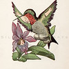 Vintage 1900s Color Illustration of Humming Bird Children from BIRD CHILDREN by Elizabeth Gorden.  The natural patina, age-toning, imperfections, and old paper antiquing of this vintage 20th century illustration are preserved in this image.