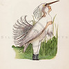 Vintage 1900s Color Illustration of Snowy Heron Bird Children from BIRD CHILDREN by Elizabeth Gorden.  The natural patina, age-toning, imperfections, and old paper antiquing of this vintage 20th century illustration are preserved in this image.