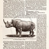 Vintage sepia illustration of Rhinoceros from Meyers Konversations Lexikon 1913 Encyclopedia.  Antique digital download of old print - rhinoceros, horn, tusk, animal, text, book, nature.  The natural age-toning, paper stains, and antique printing imperfections are preserved in this 1900s stock image.