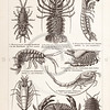 Vintage sepia illustration of crustaceans from Meyers Konversations Lexikon 1913 Encyclopedia.  Antique digital download of old print - crabs, lobsters, marine, aquatic, animals, crustacean.  The natural age-toning, paper stains, and antique printing imperfections are preserved in this 1900s stock image.