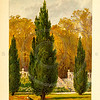 Vintage 1800s Color Illustration of Cypress Trees - FAMILIAR TREES.