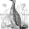 Vintage King Penguin Birds Illustration - 1800s Penguins Bird Images