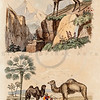 Vintage 1800s Color Illustration of Goat and Camels - DICTIONNAIRE PITTORESQUE D'HISTOIRE NATURELLE by F.E. Guerrin.