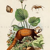 Vintage 1800s Color Animal Illustration - DICTIONNAIRE PITTORESQUE D'HISTOIRE NATURELLE by F.E. Guerrin.