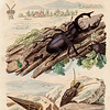 Vintage 1800s Color Illustration of Bugs - DICTIONNAIRE PITTORESQUE D'HISTOIRE NATURELLE by F.E. Guerrin.