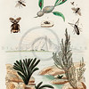 Vintage 1800s Color Illustration of Insects - DICTIONNAIRE PITTORESQUE D'HISTOIRE NATURELLE by F.E. Guerrin.