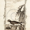 Vintage 1700s Sepia Illustration of a Seal - NATURAL HISTORY by Count de Buffon.