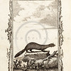 Vintage 1700s Sepia Animal Illustration - NATURAL HISTORY by Count de Buffon.
