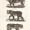 Vintage Illustration of Lions and Tigers from History of the Earth and Illustrated Nature by Oliver Goldsmith, 1850 .  Antique digital download of old print - lion, lioness, tiger, cat, feline, animal, animals, nature, wild.  The natural age-toning, paper stains, and antique printing imperfections are preserved in this 1800s stock image.