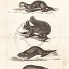 Vintage Illustration of Ermine, Polecat, Squirrel, Otter, and Badger from History of the Earth and Illustrated Nature by Oliver Goldsmith, 1850 .  Antique digital download of old print - badger, squirrel, otter, ermine, polecat, animal, animals, nature, wild.  The natural age-toning, paper stains, and antique printing imperfections are preserved in this 1800s stock image.