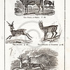 Vintage 1800s Black & White Illustration of Pasan, Gazelle, Chamois, and Antelope  - HISTORY OF THE EARTH & ANIMATED NATURE by Oliver Goldsmith.