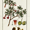 1700's Vintage Color Illustration of Medicinal Plants by Johannes Zorn