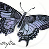Vintage Lavender Purple Butterfly Illustration - 1800s Butterflies.