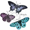 Vintage Blue Pink Purple Butterfly Illustration - 1800s Butterflies.