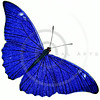 Vintage Blue Butterfly Illustration - 1800s Butterflies.