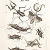 Vintage Illustration of Bees, Wasps, Grasshopper, Locust, and Crickets from the American Edition of the British Encyclopedia, 1817.  Antique digital download of old print - bees, wasps, grasshoppers, locust, cricket, crickets, bee, insects, animals, nature, encyclopedia, encyclopedic.  The natural age-toning, paper stains, and antique printing imperfections are preserved in this 1800s stock image.
