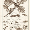 Vintage Illustration of Wasps and Insects from Histoire Naturelle by Benard Direxit, 1800.  Antique digital download of old print - wasp, bugs, wasps, natural, nature, insect, bug, animal, nature, encyclopedia, encyclopedic.  The natural age-toning, paper stains, and antique printing imperfections are preserved in this 1800s stock image.