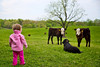 Mia approaches the cows - 4-28-2013