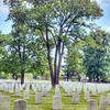 Trees in Graves