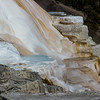 Upper Terraces--Mammoth Hot Springs