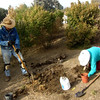 2013-1217-1129-11 (071) by Brad Heckman - Digging out coyote brush stumps.