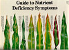 guide to plant nutrient deficiency