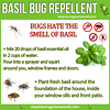 bugs hate the smell of basil