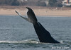 Cape Henry Whale Day! February 18, 2012